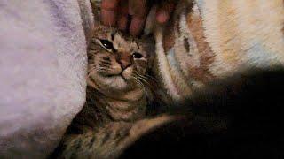 目が覚めたら猫が妻の下敷きになっていました。