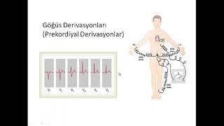 EKG | EKG'ye giriş | Fizyoloji pratik ders 8