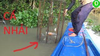 Đặc đó dính cá mè vinh ú nù thật đã l Fishing