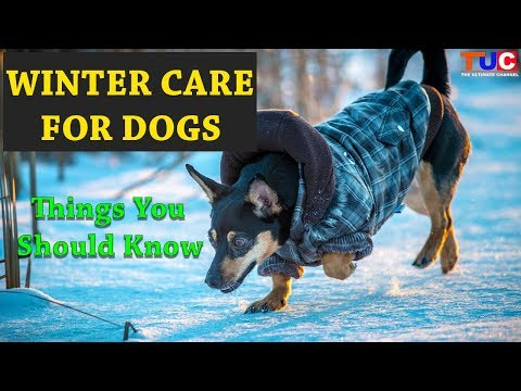 Winter Care For Dogs : Things You Should Know : TUC