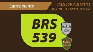 Cultivar de soja BRS 539 - Tecnologia Shield e Tecnologia Block