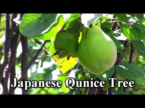 top ten healthy fruits amla fruit