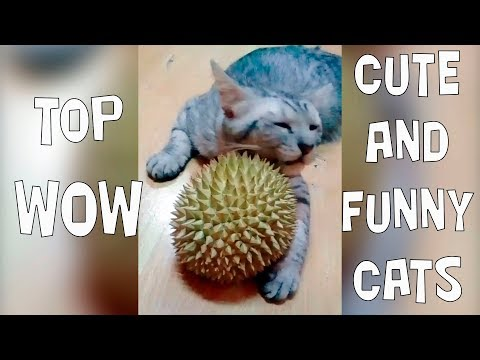 TOP Cute and Funny Cats and Kittens 2019 - Try not to say aww!