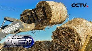 《聚焦三农》 20190510 秸秆不烧行不行  CCTV农业