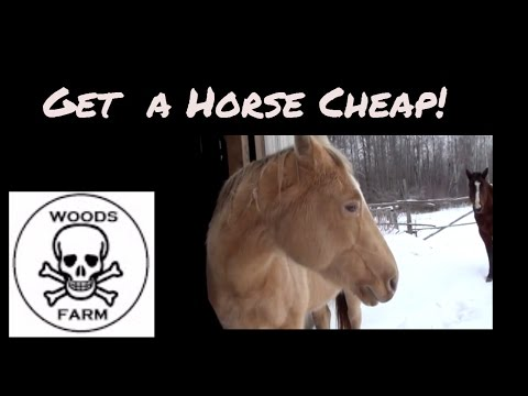 Three Tips On How To Buy A Horse Cheap