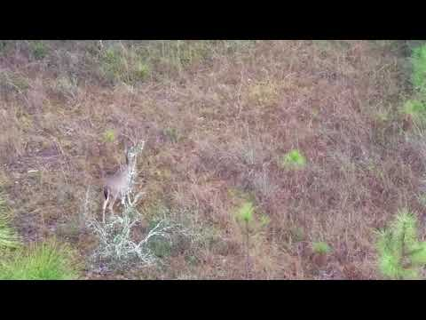 Central Florida WMA Deer Hunting