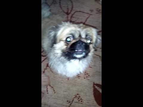 Злой пёс.Собаке срочно нужен экзорцизм!!!))))