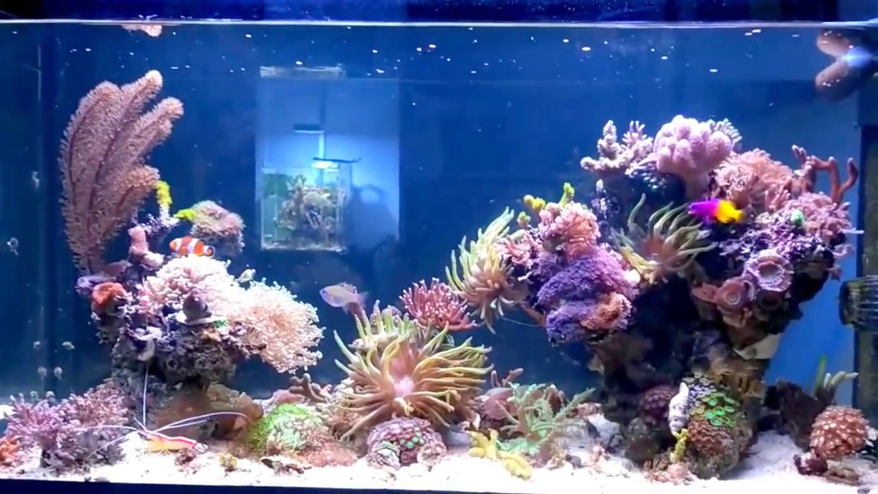 mein 200 liter meerwasser aquarium my 50 gallon reef. Black Bedroom Furniture Sets. Home Design Ideas