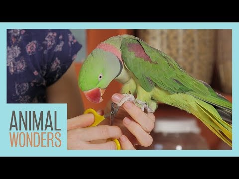 Keeping Your Parrot Clean | Bird Hygiene