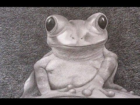 Aprender a dibujar cmo dibujar una rana realista  Arte Divierte