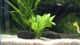 My Best 10 Gallon Planted Aquarium Fish Tank (hd)