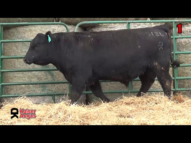Kaiser Angus Ranch Lot 1
