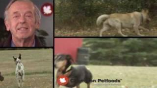 История компании Champion Petfoods (ACANA, Orijen) ENG P.1