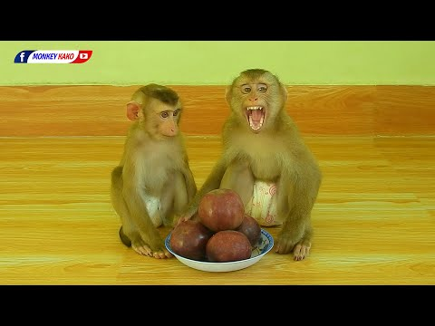 Funny Animals, Baby Monkey KAKO & LUNA Eating Sweet Red Milk Fruits