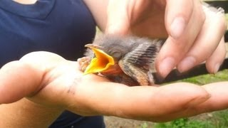 Cool Story on Saving Baby Bird From My Cat.