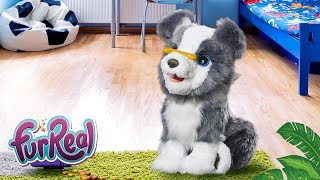 FurReal Friends Latino América - ¡Mira como Ricky, El Cachorro Habilidoso atrapa su hueso!