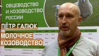 Смотреть видео Фермер Петр Галюк. О молочном козоводстве. Выставка Золотая Осень-2017 онлайн