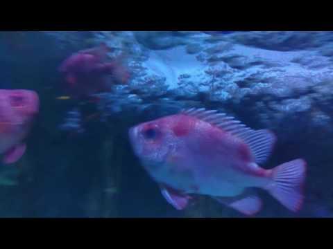 Fun times at Denver Aquarium(21)