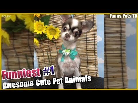 Funniest Cats and Dogs 😻 - 🐶 Funny Compilation #1 (August.2019)