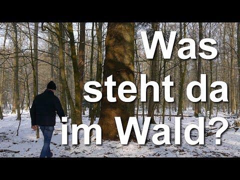 Was steht da im Wald? Waldspaziergang im Buchenwald im Kreis Rendsburg-Eckernförde