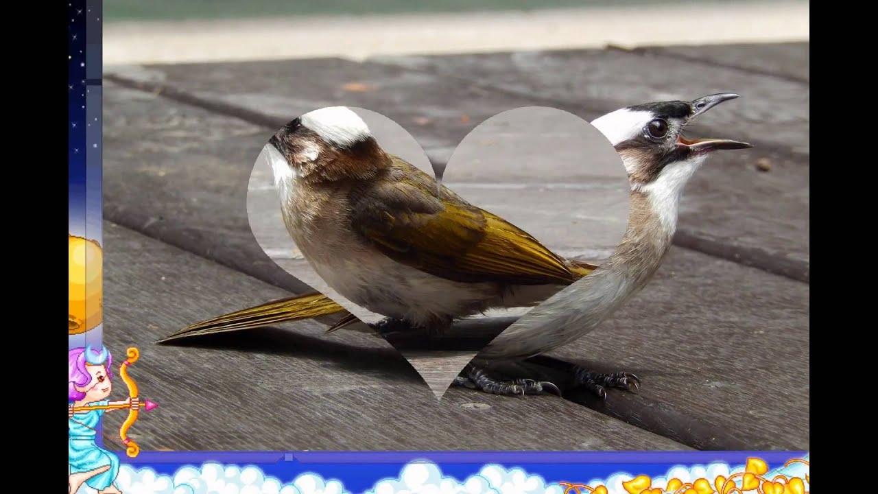 可愛鳥類 - YouTube