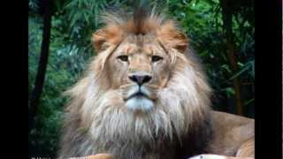 sinsemilla-zion lion lyrics