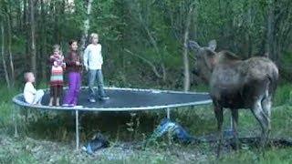 hilfe, ein elch in unserem garten..