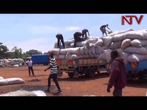Charcoal ban in Kenya leads to Charcoal business boom in Busia