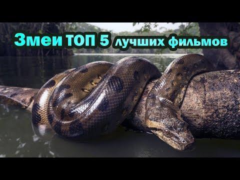 Змеи ТОП 5 лучших фильмов