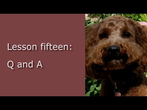 Cockapoo Puppy Training - 15 - Q And A