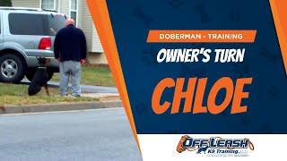 "Owner Working His Olk9 Trained Dog ""chloe"" On Heel In Neighborhood! Doberman Training Virginia"