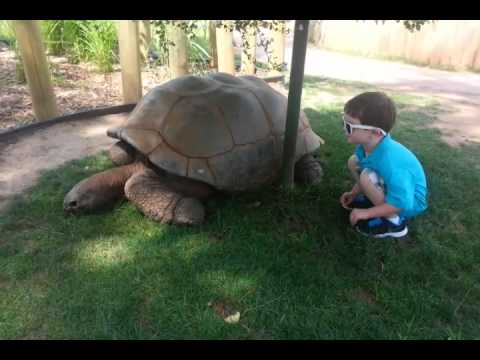 Giant Tortoise Reptile Gardens South Dakota - YouTube