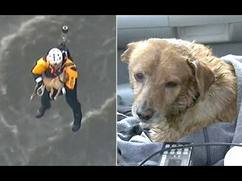 Dog pulled from LA river in dramatic helicopter rescue