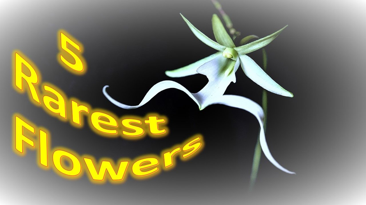 Top 5 Rarest Flowers In The World Five Most Beautiful And Very