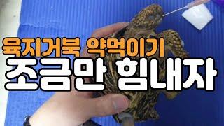 폐렴걸린 육지거북이 강제로 가루약 먹이기[옥탑방거북이]