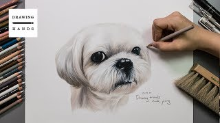 Speed Drawing Shih Tzu [Drawing Hands]