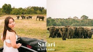 스리랑카 여행. 야생 코끼리 사파리를 하다!