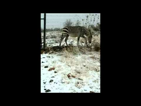 Climate Disaster: Snow in Namibia Desert