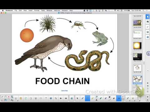 APBio Ch 45Part 2: Energy Flow and Chemical Cycling
