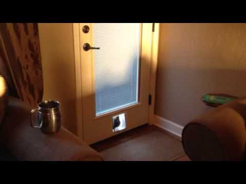 Thumbnail for Cat Video Epic Cat Door Fail, Part 2: Cat Entry
