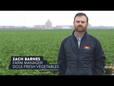 Farming the Future: Harvesting Data on Blockchain