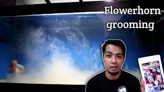 FLOWERHORN grooming | Watchupong AquaMineral
