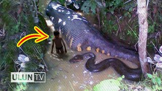 Download Video 5 Sosok Penunggu Hutan Amazon Paling Mengerikan MP3 3GP MP4