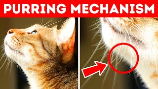 40 Awesome Cat Facts to Understand Them Better