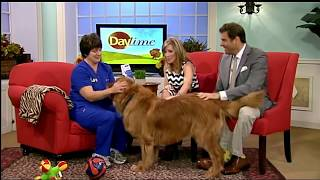 8/29/14 - Tampa Veterinary Hospital's Dr  Melissa Webster shares tips to help your Lonely Pet!