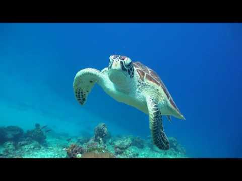 PADI - Diving In Singapore