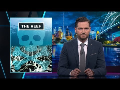 The Great Barrier Reef Foundation | The Weekly