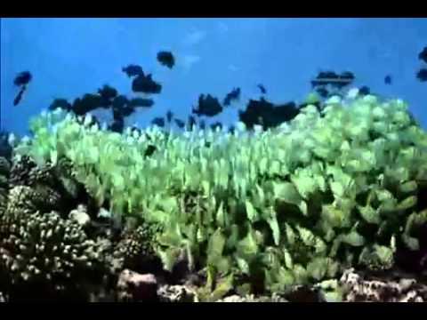 Thám hiểm Đại dương