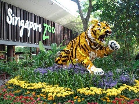 Singapore Zoo The Movie
