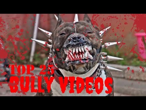 CRAZYTop 25 Best American Bully Videos Vol.4